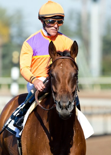 Jockey Gary Stevens guides Beholder to the winner's circle after their victory in the Grade I, $400,000 Vanity Mile, Saturday, June 4, 2016 at Santa Anita Park, Arcadia CA. © BENOIT PHOTO