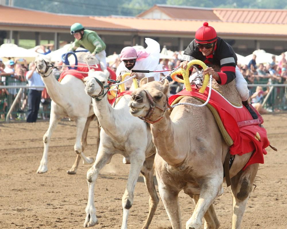 Ostrich and Camel Races Return to Ellis Park