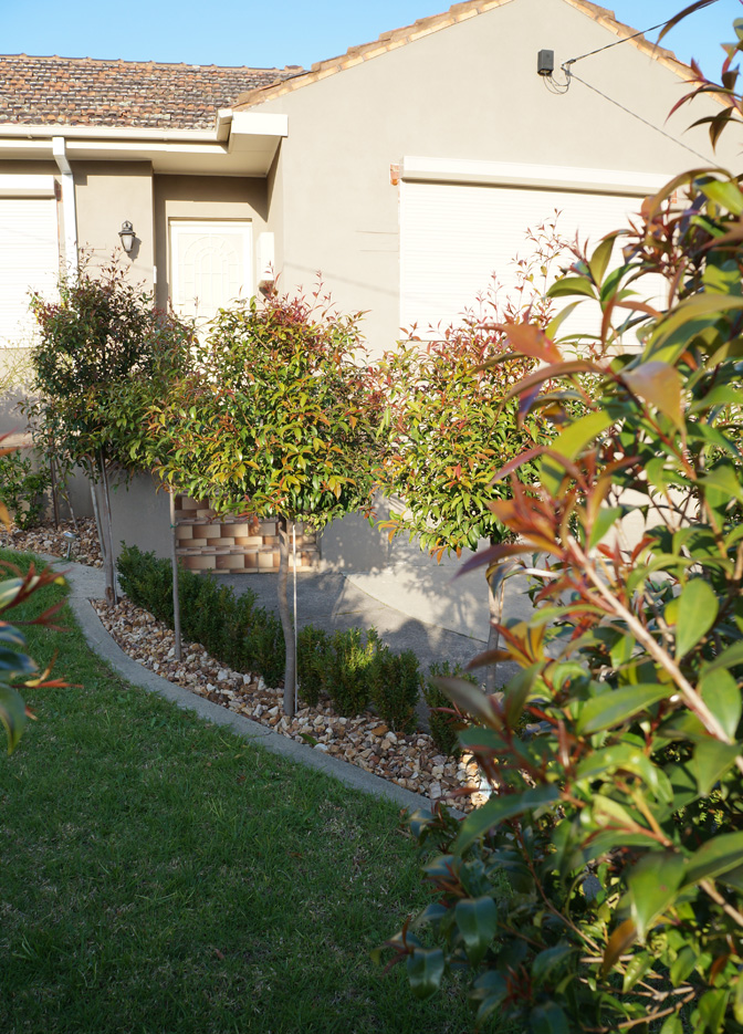Planting Box Garden