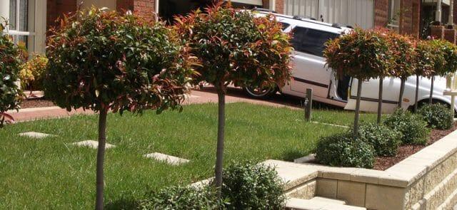 Hardy Standards for Modern Stylish Gardens  Garden Ideas