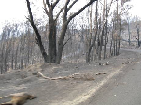 Gippsland Bushfires