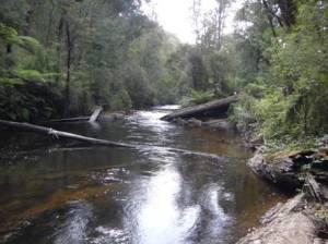 West Tanjil River, Costins Rd near Fumina South looking upstream.