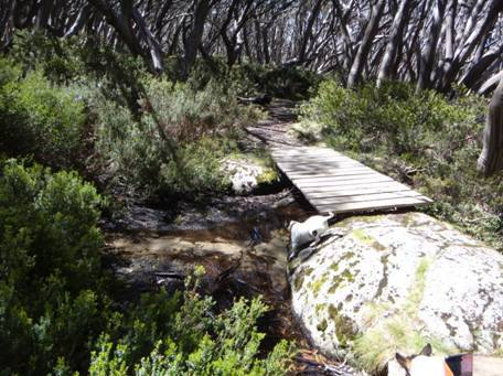 Upper Yarra & Australian Alps Walking Tracks