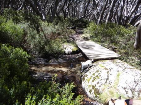 Upper Yarra & Australian Alps Walking Tracks