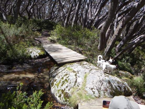 Upper Yarra Walking Track (4 Days)