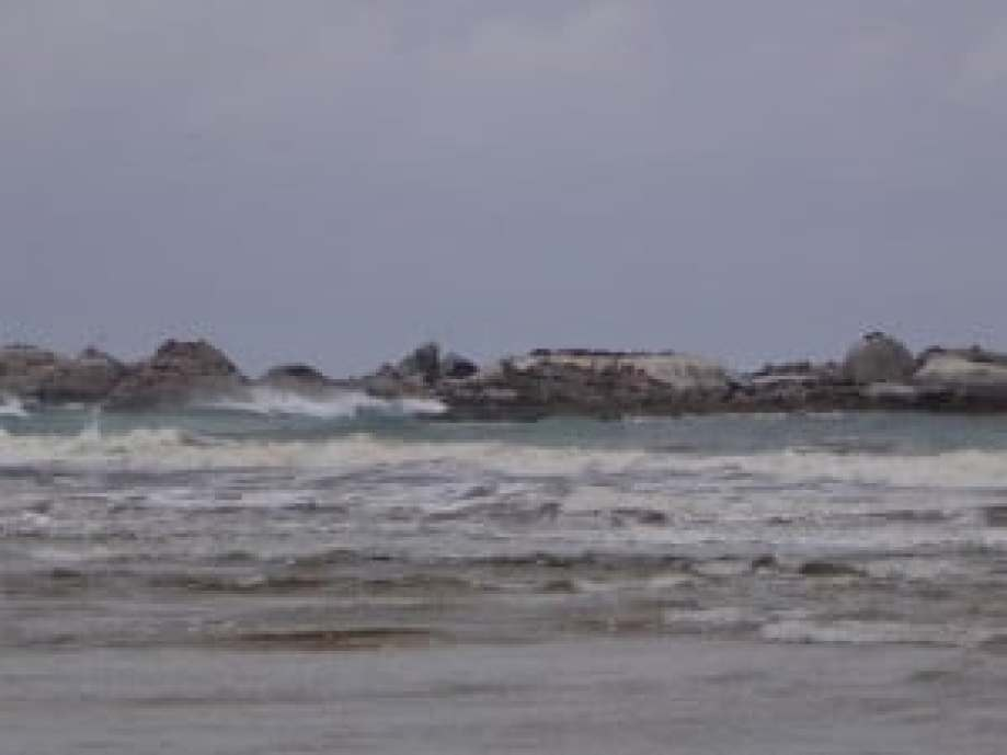 Seals, The Skerries, Wingan Inlet