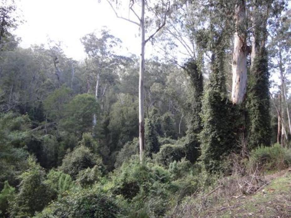 Combienbar Rainforest
