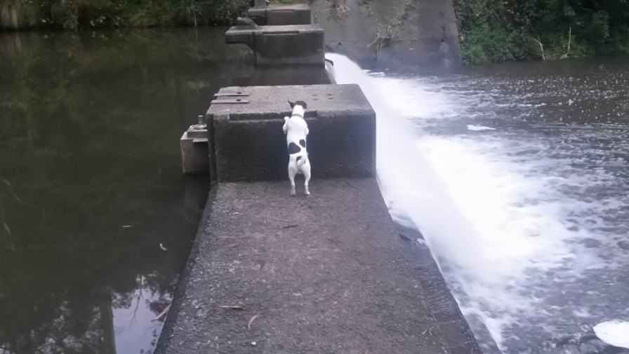 Spot checks out the lower weir, a popular swimming hole in summer