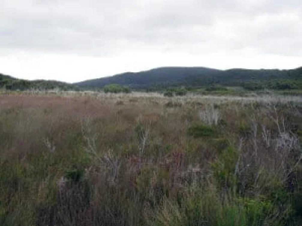 the less than picturesque button grass plains