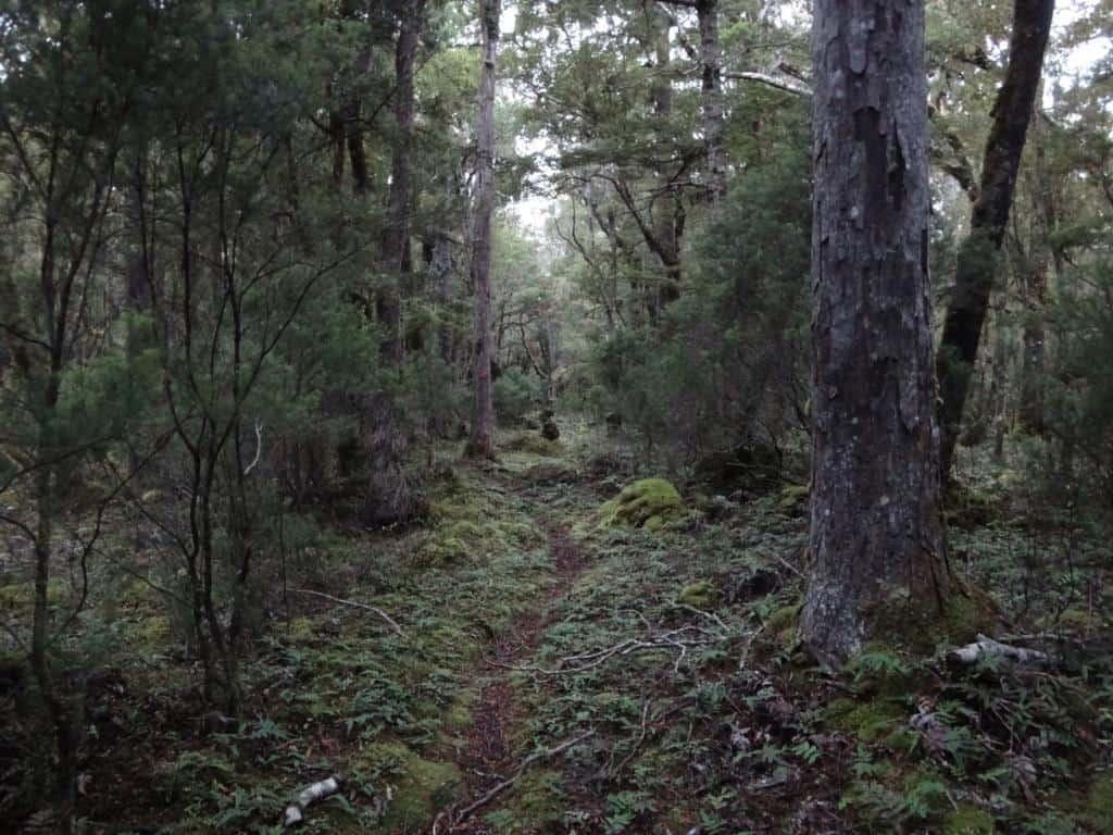 South Coast track Fiordland NZ: Waitutu Forest Fiordland: Warm Air Pockets