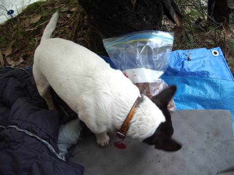 Hiking with a Jack Russell
