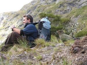 April: Kea: Centre Pass Dusky Track Fiordland