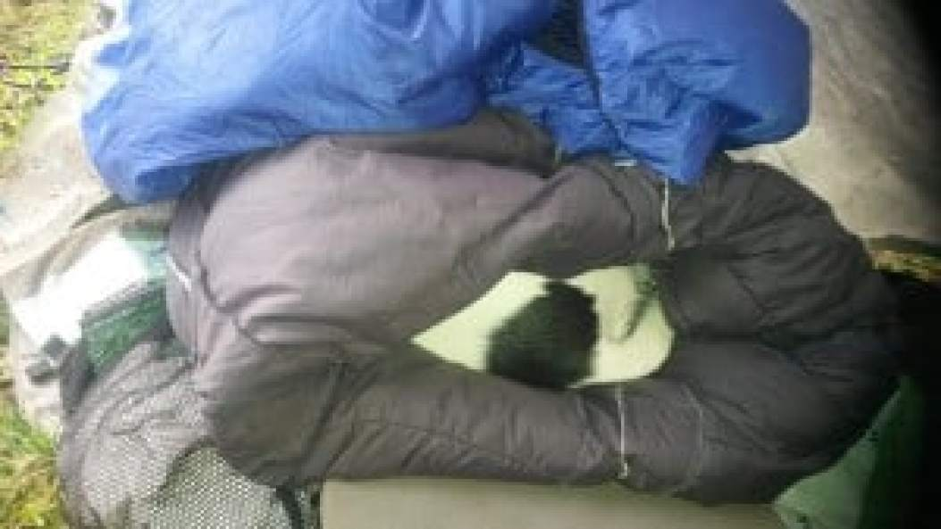 Spot enjoys his sleeping bag.