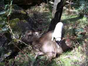 Tiny loves deer - she likes them cut up a little smaller though.