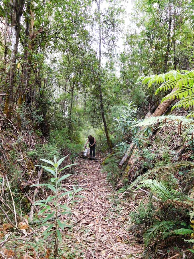 Upper Yarra Track: Winter Route: Caringal Scout Camp: Tyers Junction