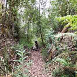 Wonnangatta: Waterford to Angusvale Day Three: – The