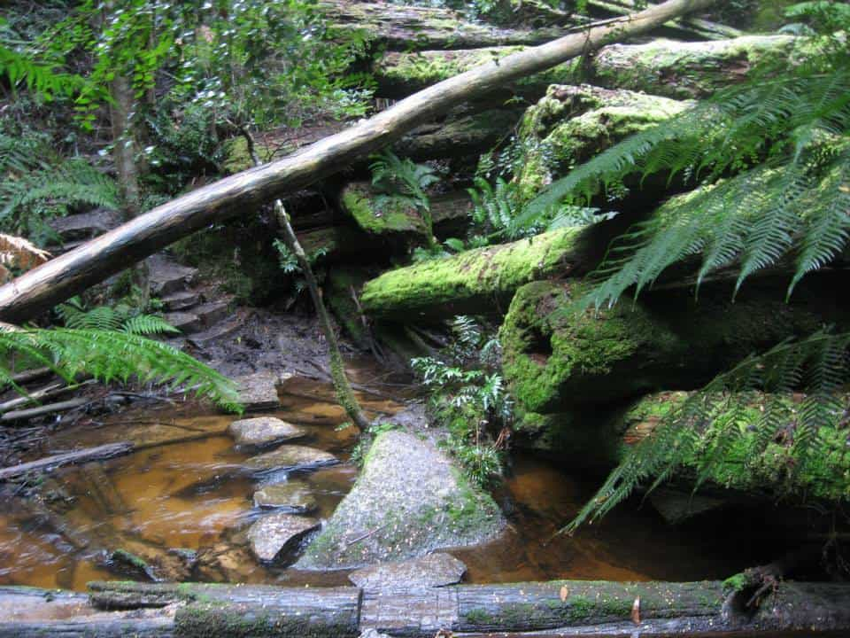 Upper Yarra Track Section Eleven: Ada Tree to Big Pat's Creek: