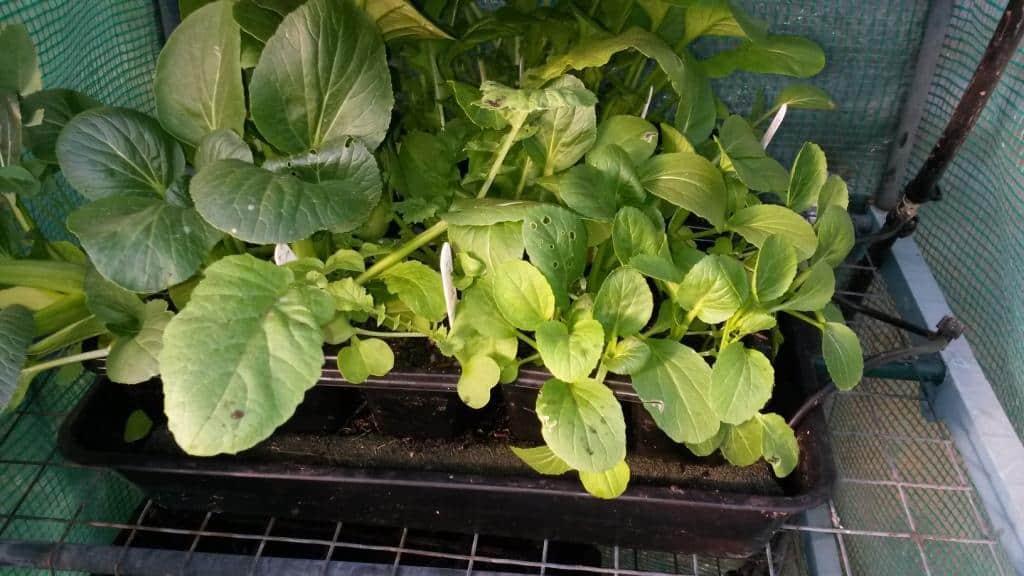 Capillary Mat Plant Starters: