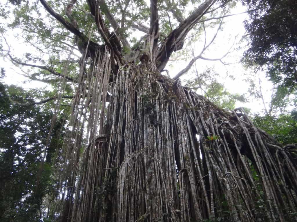 Cloud Forests of North Queensland: