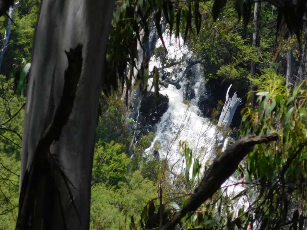 An Excursion to the Upper Yarra Falls: