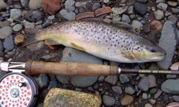 Too early for dry fly