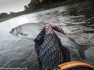 Another Annan Grayling