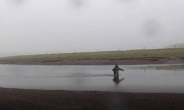 Rain, Sleet, Snow, Rain, Fish?