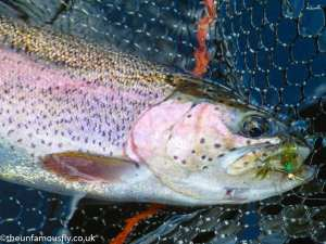 The Damsel was a popular flie with the Rainbows