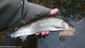 Returning grayling