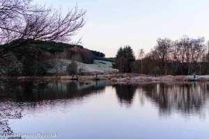 Frosty Swanswater