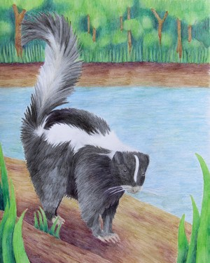 Skunk – Poster of Watercolor Pencil Mammal Fine Art