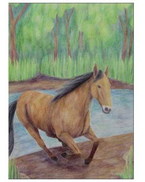 Card - Horse - Folded Greeting Cards Of Equine Land Mammal Watercolor Pencil Fine Art