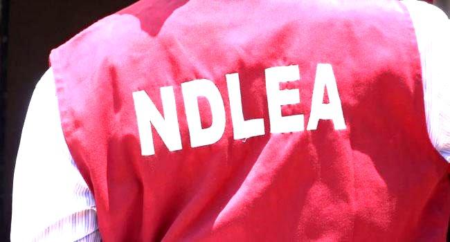 ndlea intercepts