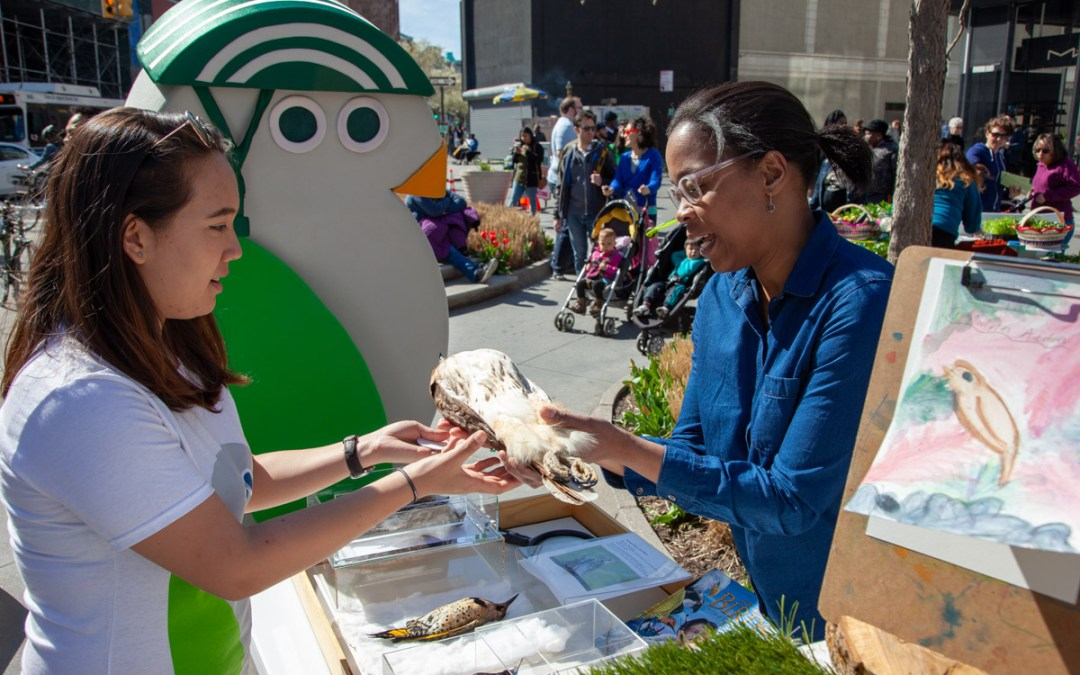 READ and EXPLORE (with birds!) at Albee Square, Brooklyn
