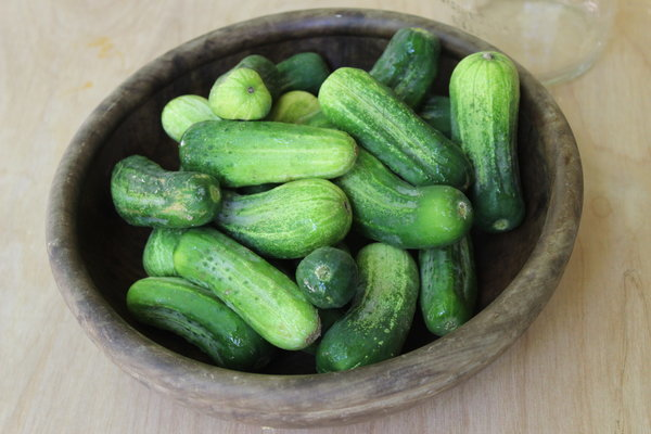 easy raw aip paleo pickles