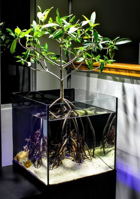 Amazing Home aquariums 2020