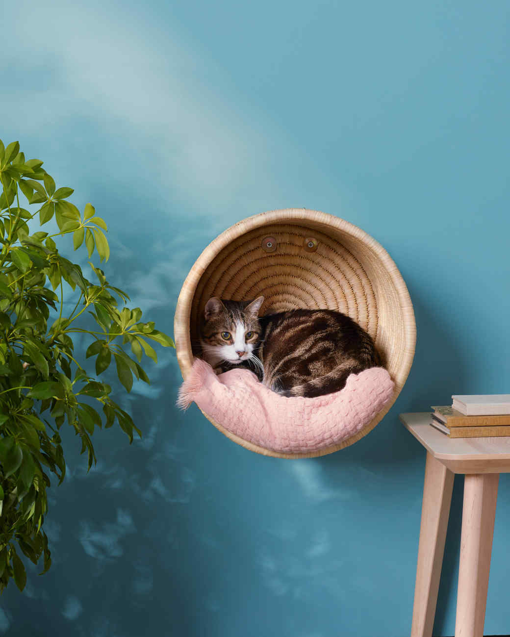 Cat Basket Bed Ideas