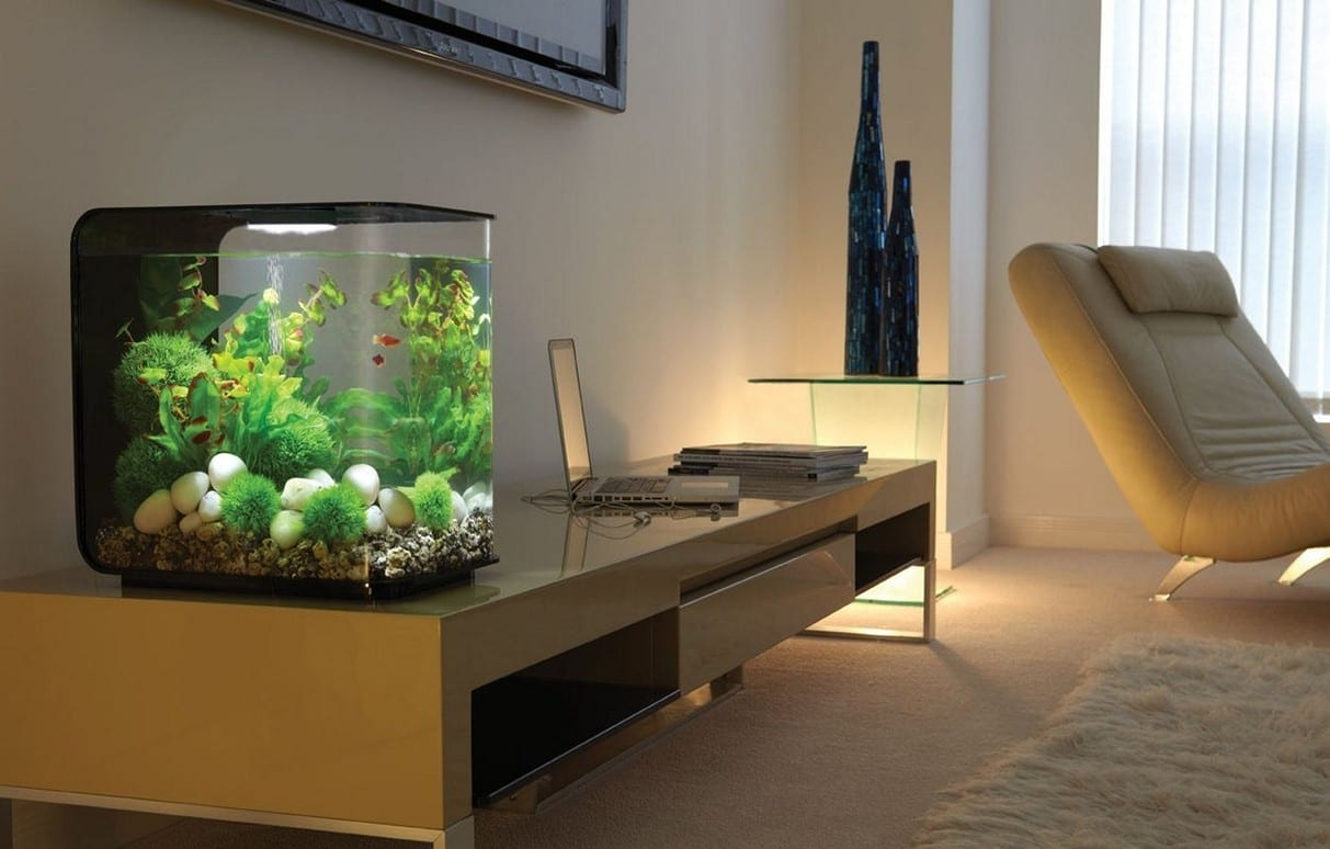 Fish Tank Ideas for Modern Homes