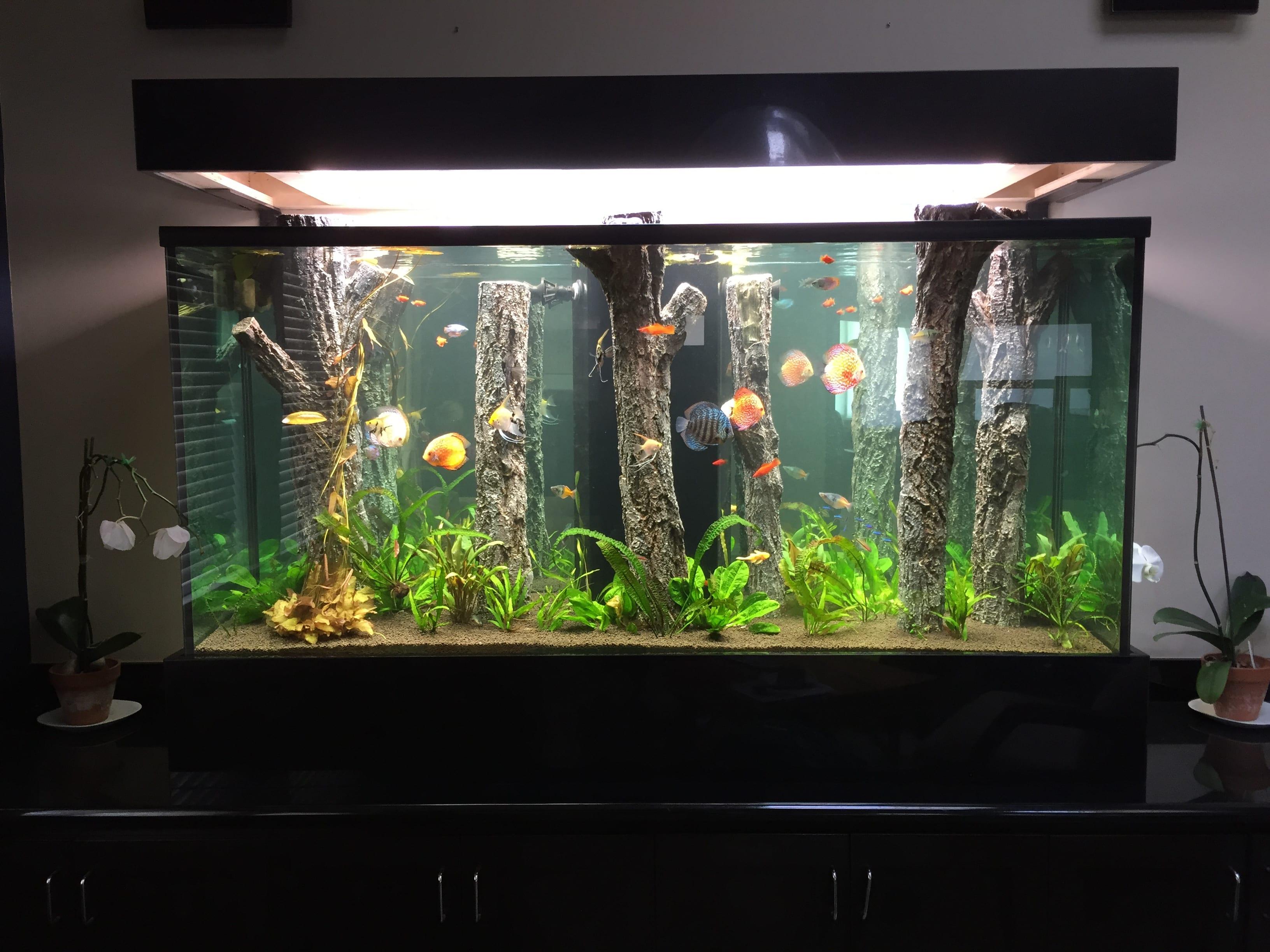 Small-Home-Aquarium-Design-Ideas