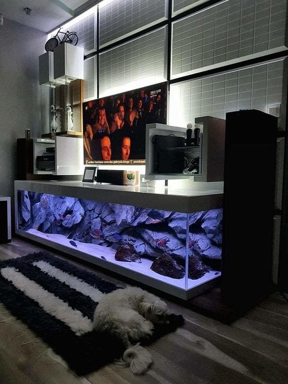 Stunning Home Aquarium Ideas for You