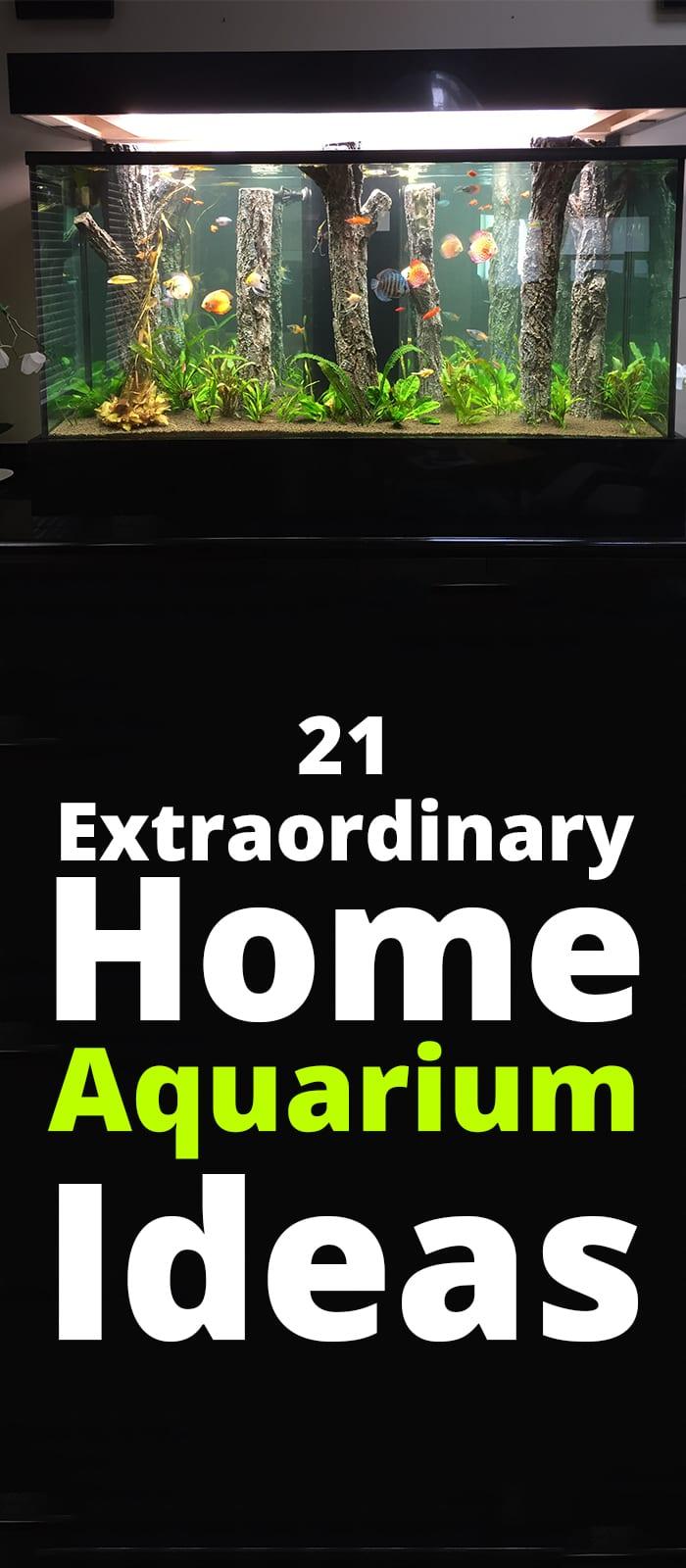 Extraordinary Home Aquarium Ideas