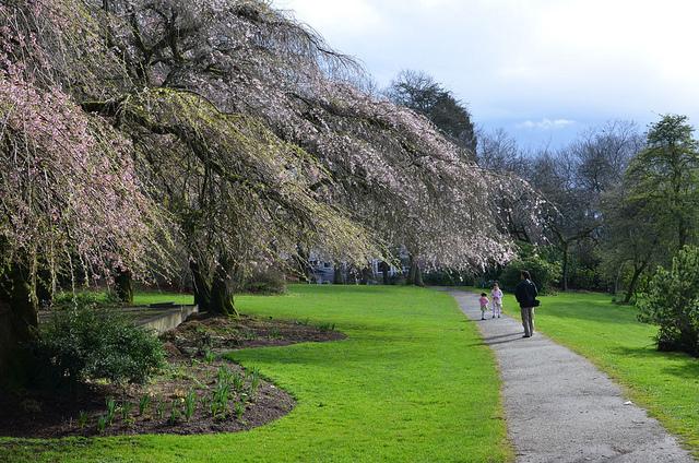 Volunteer Park Seattle