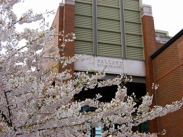 Cherry blossoms outside Ballard High.
