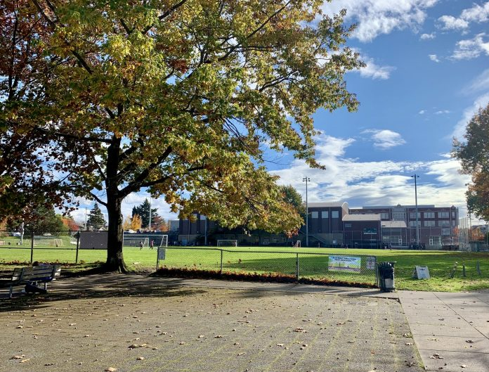 A photo of a tall tree and a paved area next to a large playfield.