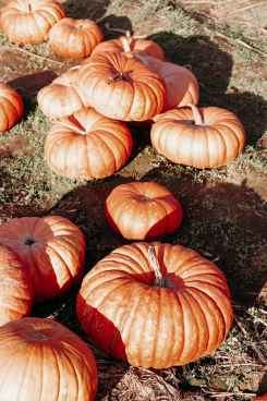 maan-farms-pumpkin-patch