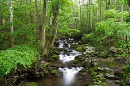 Great Smokey Mountains, Tennessee