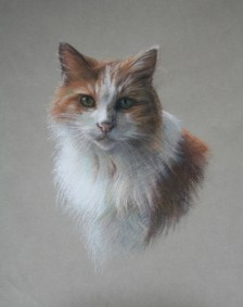 Pet portrait in Pastels of a cat by Annabelle Valentine