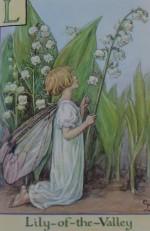 lilyfairy