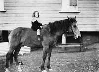 high_horse1890