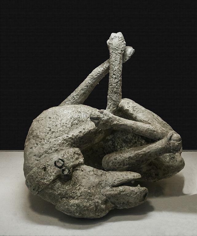 pompeii dog 2